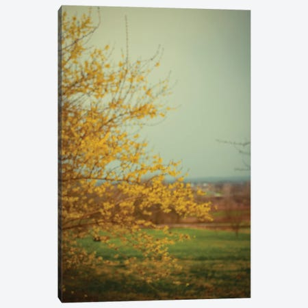 Forsythia 3-Piece Canvas #OJS136} by Olivia Joy StClaire Canvas Print