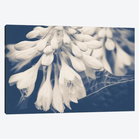 In The Morning Canvas Print #OJS139} by Olivia Joy StClaire Canvas Wall Art