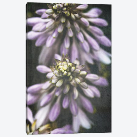 Lavender Flowers Canvas Print #OJS140} by Olivia Joy StClaire Canvas Art Print