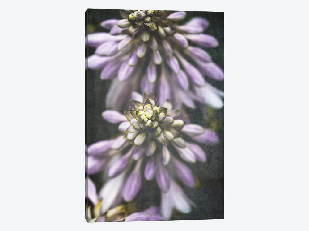 Lavender Flowers by Olivia Joy StClaire 1-piece Canvas Print