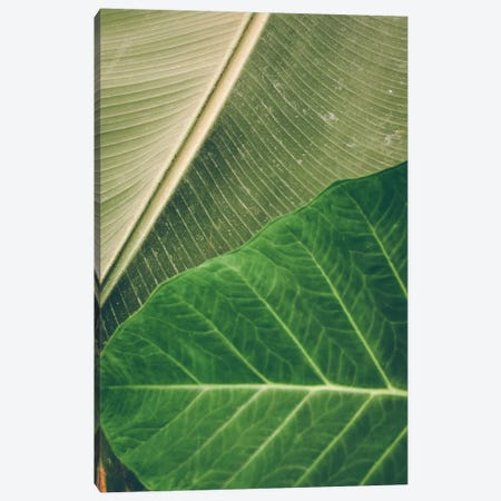 Leaves I Canvas Print #OJS142} by Olivia Joy StClaire Art Print