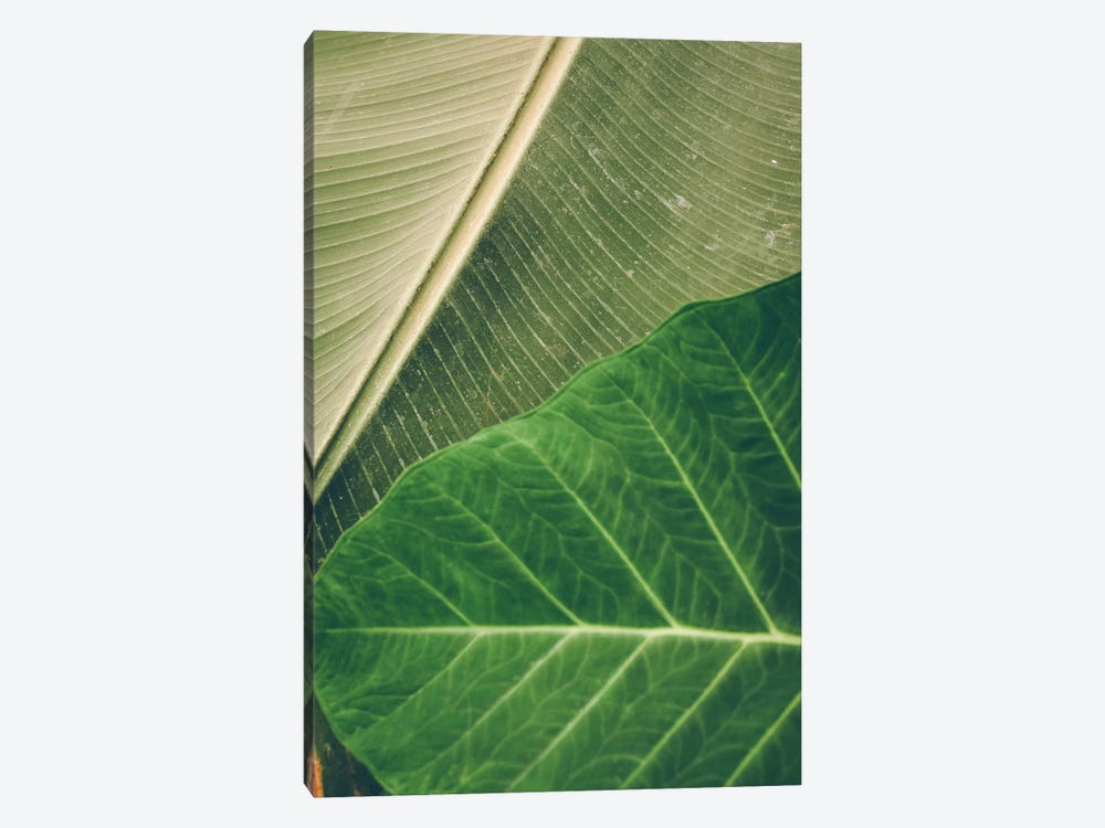 Leaves I by Olivia Joy StClaire 1-piece Canvas Print