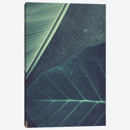 Leaves II 3-Piece Canvas #OJS143} by Olivia Joy StClaire Canvas Print