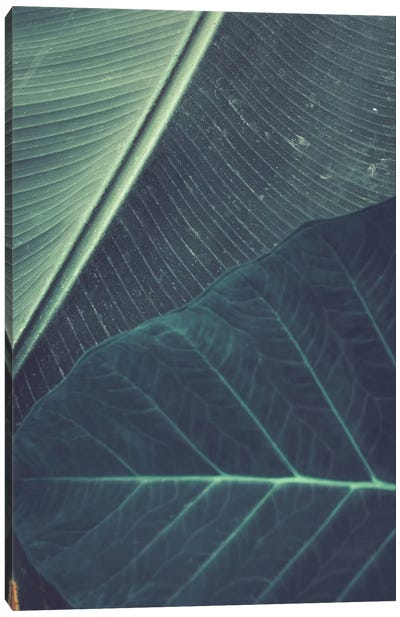 Leaves II Canvas Art Print