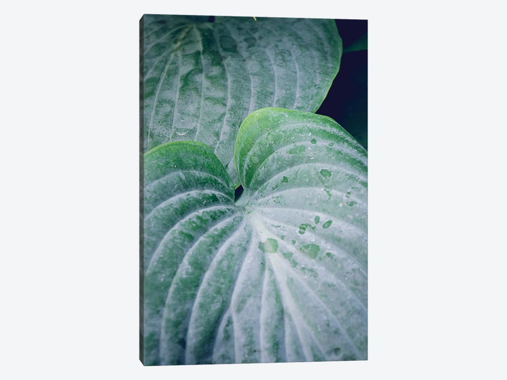 Leaves III by Olivia Joy StClaire 1-piece Canvas Print