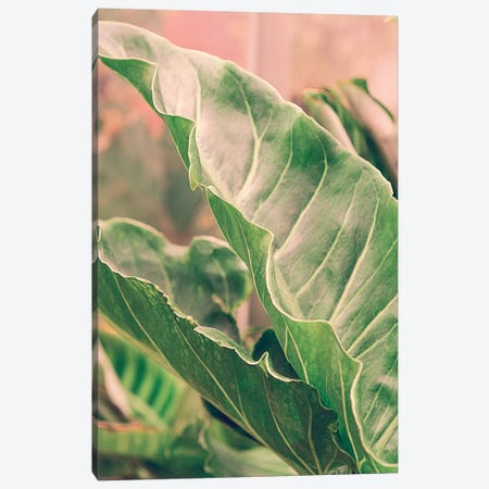 Leaves V Canvas Print #OJS145} by Olivia Joy StClaire Canvas Art