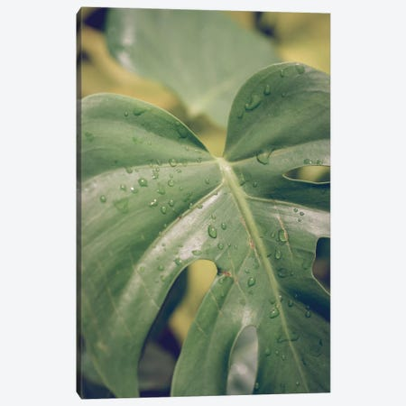 Leaves VI Canvas Print #OJS146} by Olivia Joy StClaire Canvas Art