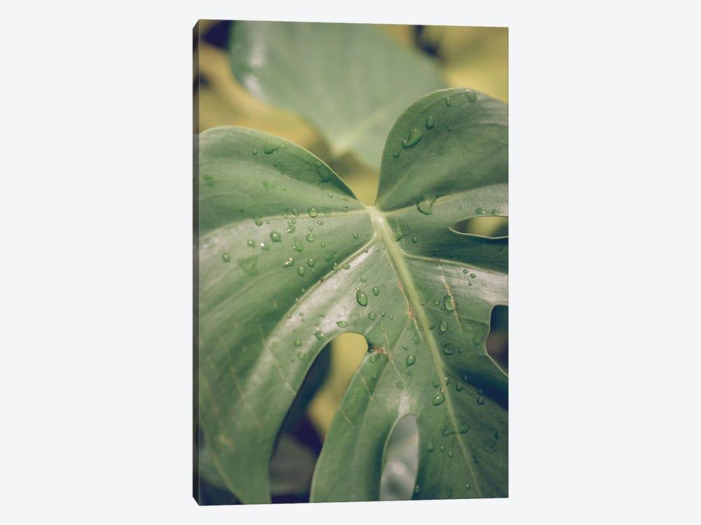 Leaves VI by Olivia Joy StClaire 1-piece Canvas Art Print