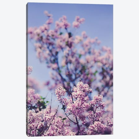 Lilacs Against The Sky Canvas Print #OJS147} by Olivia Joy StClaire Canvas Art