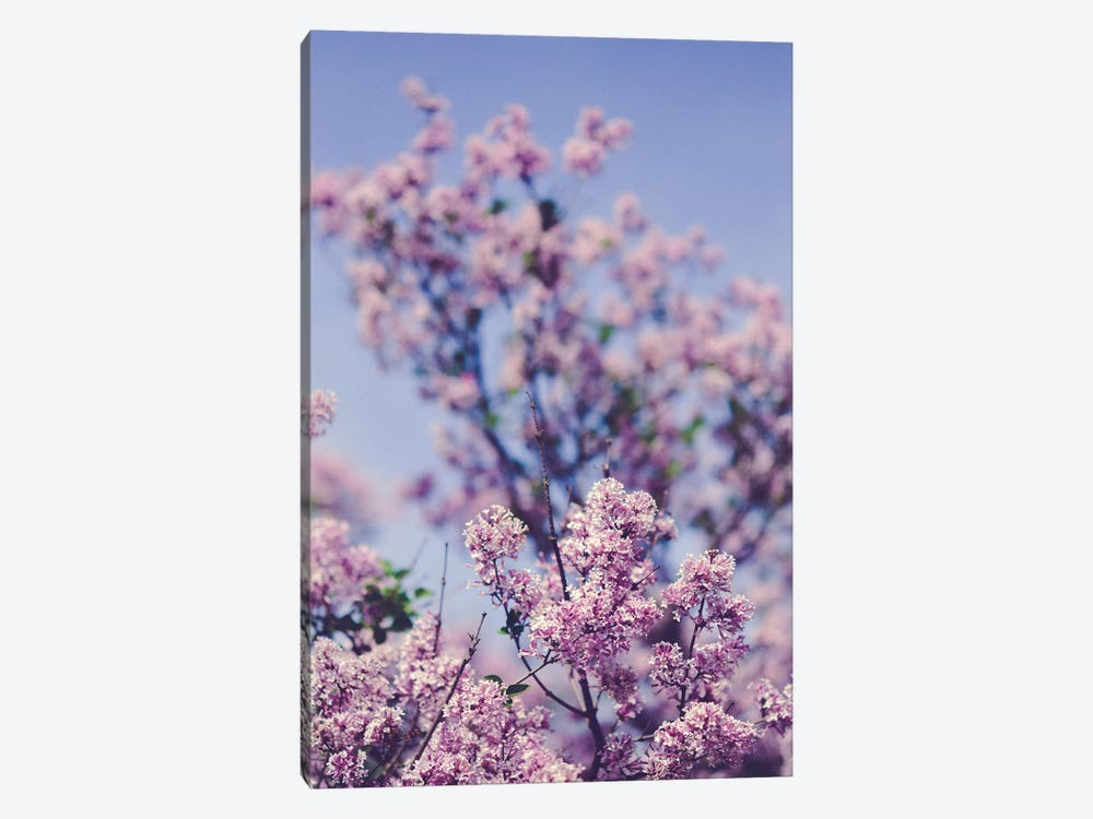 Lilacs Against The Sky by Olivia Joy StClaire 1-piece Canvas Wall Art