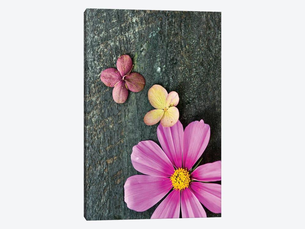 Pink Cosmos by Olivia Joy StClaire 1-piece Canvas Art Print