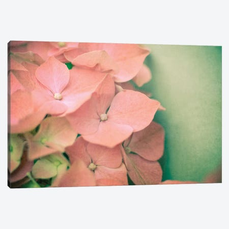 Pink Hydrangea Canvas Print #OJS159} by Olivia Joy StClaire Canvas Wall Art