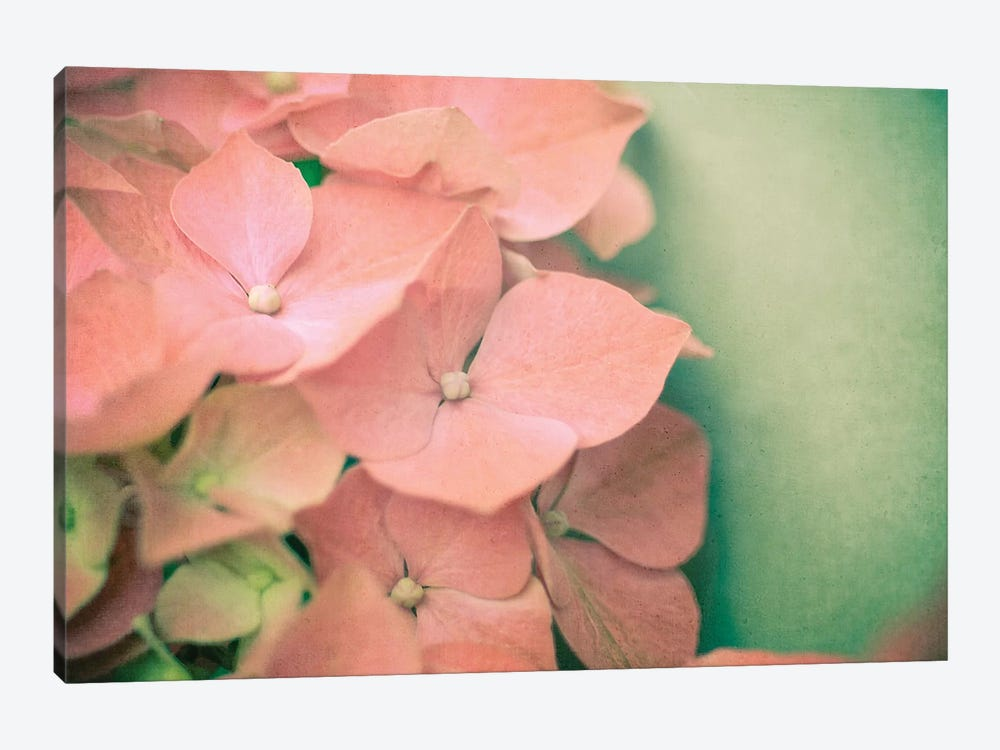 Pink Hydrangea by Olivia Joy StClaire 1-piece Canvas Art Print