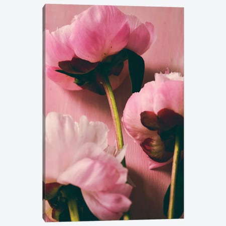 Pink Peony II Canvas Print #OJS161} by Olivia Joy StClaire Canvas Art Print