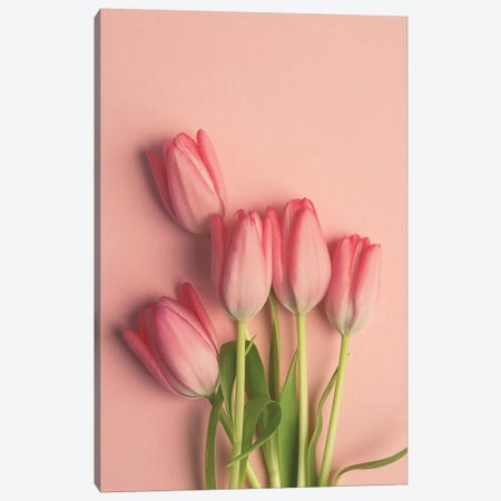 Pink Tulips On Pink Canvas Print #OJS163} by Olivia Joy StClaire Canvas Print