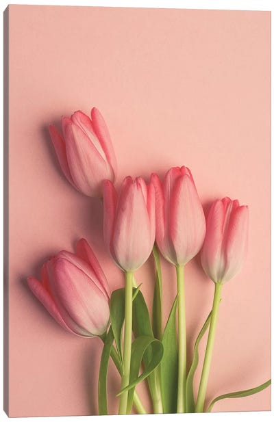 Pink Tulips On Pink Canvas Art Print