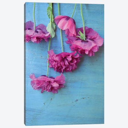 Poppies Canvas Print #OJS164} by Olivia Joy StClaire Canvas Art