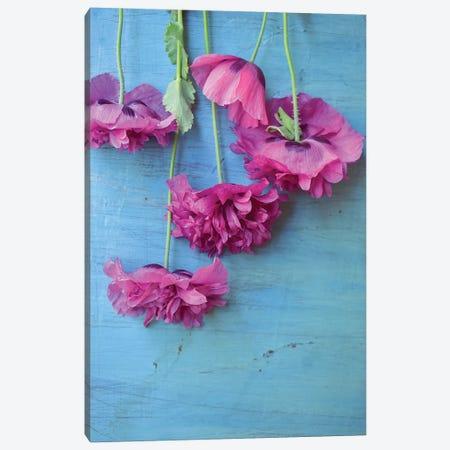 Poppies Canvas Print #OJS164} by Olivia Joy StClaire Canvas Art