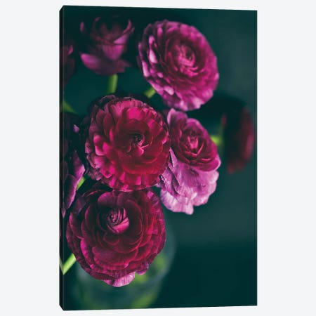 Purple Ranunculus II 3-Piece Canvas #OJS166} by Olivia Joy StClaire Canvas Artwork
