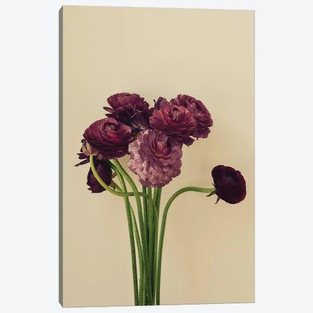 Purple Ranunculus IV Canvas Print #OJS167} by Olivia Joy StClaire Canvas Wall Art