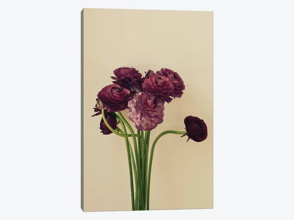 Purple Ranunculus IV 1-piece Canvas Art