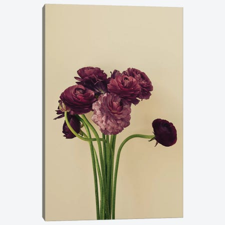 Purple Ranunculus IV 3-Piece Canvas #OJS167} by Olivia Joy StClaire Canvas Wall Art