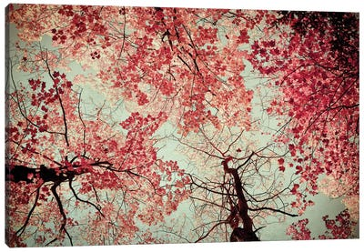 Fall Color Canvas Print #OJS16