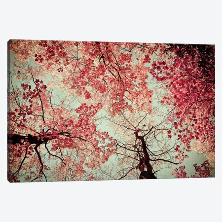 Fall Color Canvas Print #OJS16} by Olivia Joy StClaire Canvas Art Print
