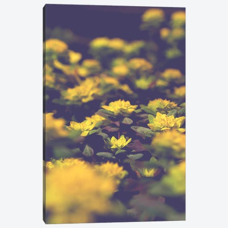 Subtle Canvas Print #OJS179} by Olivia Joy StClaire Canvas Artwork