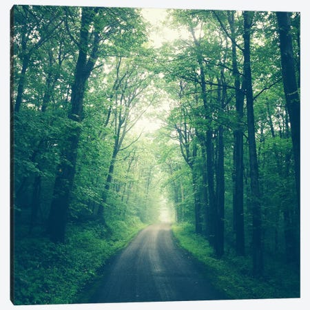Forest Road Canvas Print #OJS18} by Olivia Joy StClaire Canvas Artwork