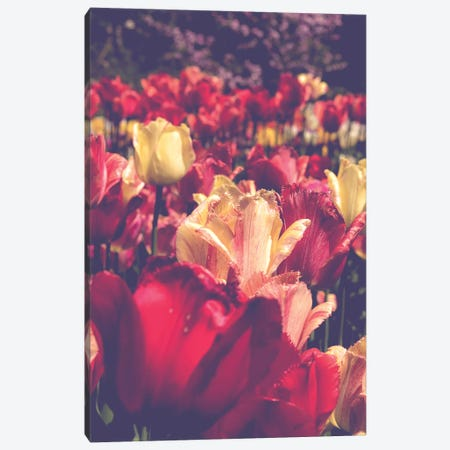 Tulip Love Canvas Print #OJS190} by Olivia Joy StClaire Canvas Artwork