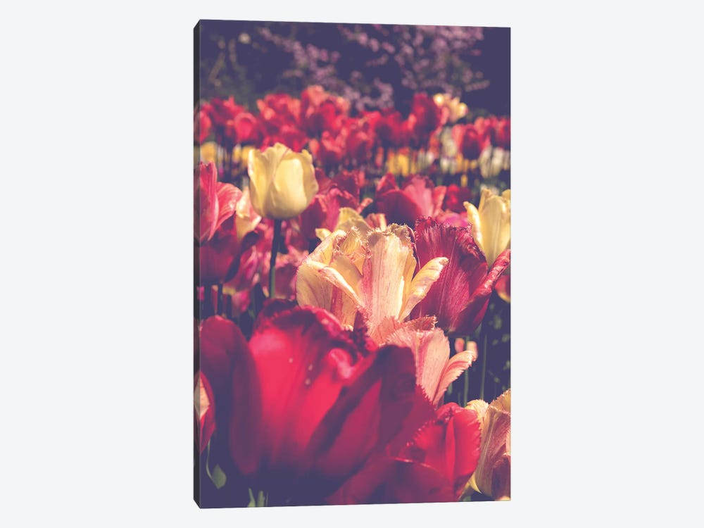 Tulip Love by Olivia Joy StClaire 1-piece Canvas Art