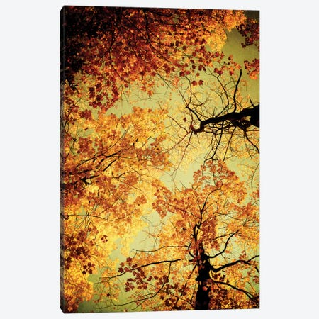 Golden Canvas Print #OJS19} by Olivia Joy StClaire Canvas Wall Art