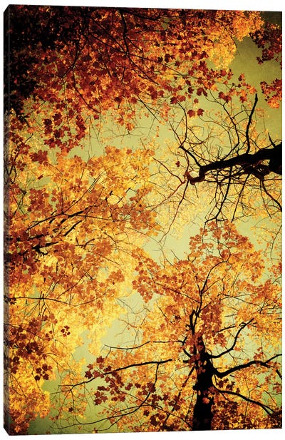 Golden Canvas Art Print