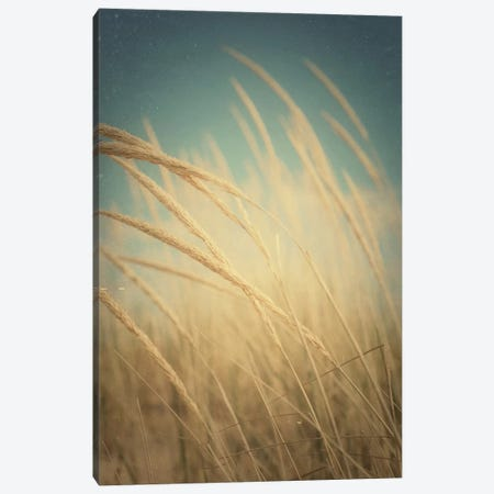 Windswept Canvas Print #OJS204} by Olivia Joy StClaire Art Print