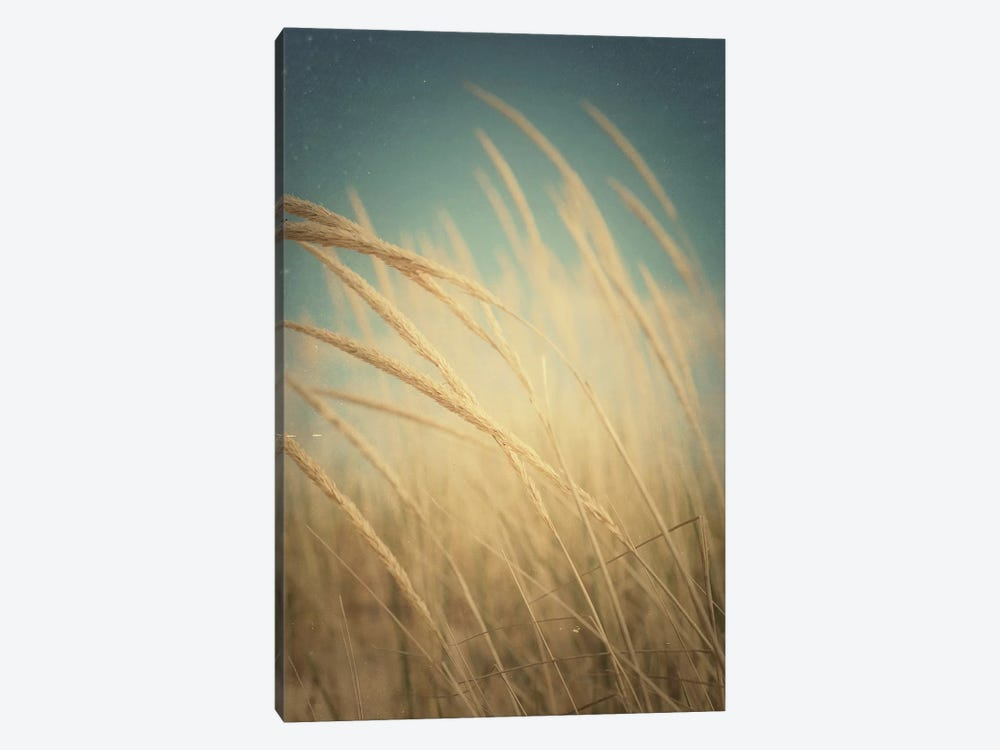 Windswept by Olivia Joy StClaire 1-piece Canvas Print