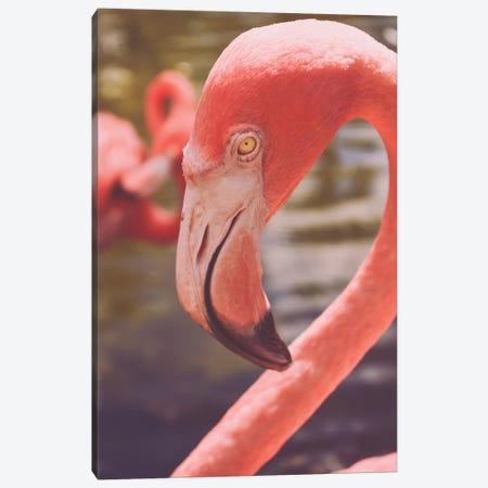 Flamingo Love Canvas Print #OJS209} by Olivia Joy StClaire Canvas Wall Art