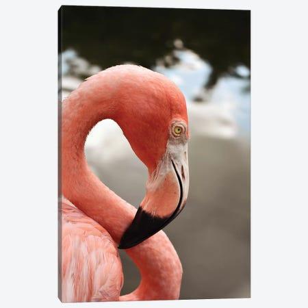 Pink Flamingo Canvas Print #OJS211} by Olivia Joy StClaire Art Print