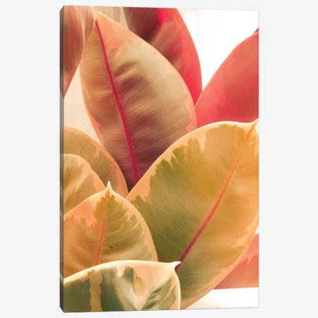 Beautiful Leaves LI Canvas Print #OJS219} by Olivia Joy StClaire Canvas Print