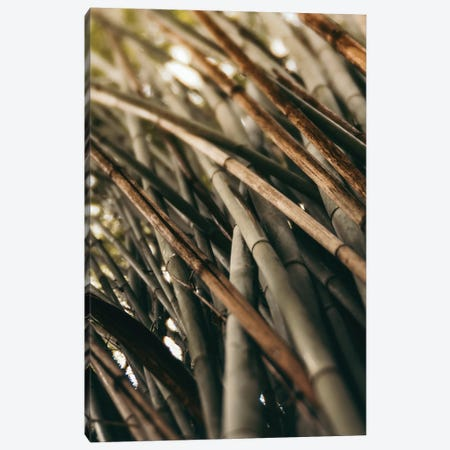 Bamboo Study L Canvas Print #OJS228} by Olivia Joy StClaire Canvas Wall Art