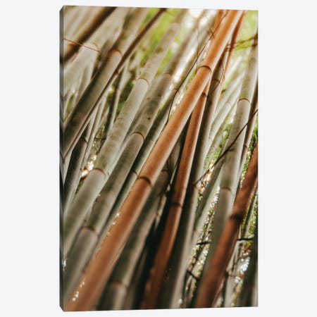 Bamboo Study LI Canvas Print #OJS229} by Olivia Joy StClaire Canvas Wall Art