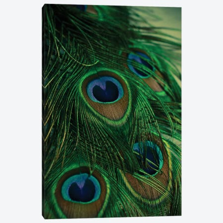 Iridescent Canvas Print #OJS22} by Olivia Joy StClaire Canvas Art Print