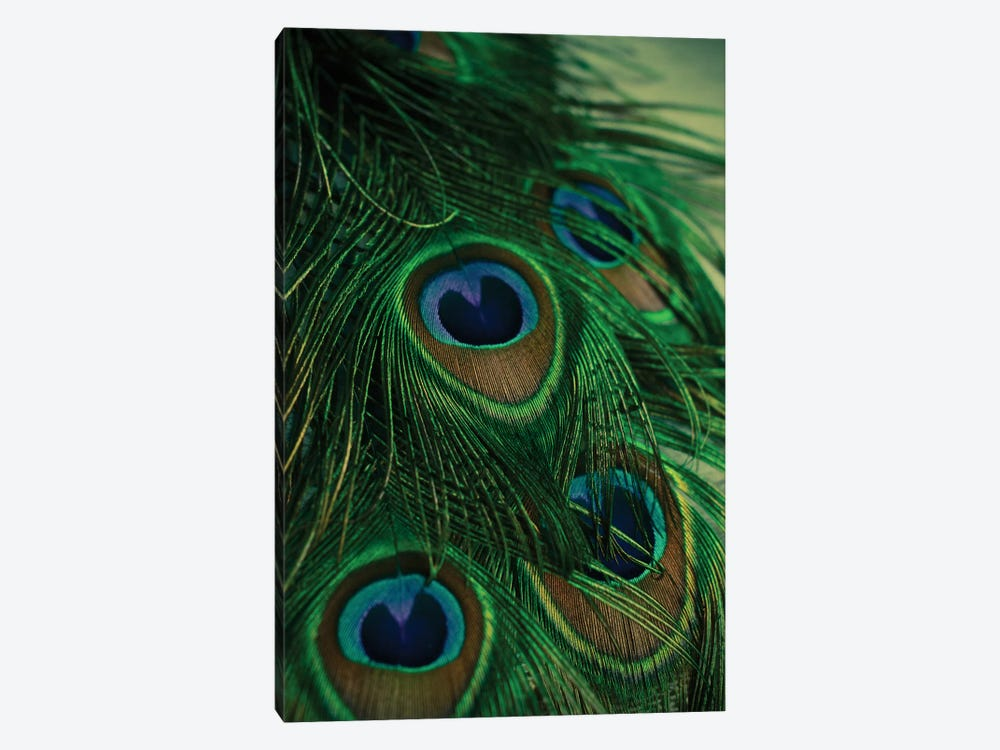 Iridescent by Olivia Joy StClaire 1-piece Canvas Artwork