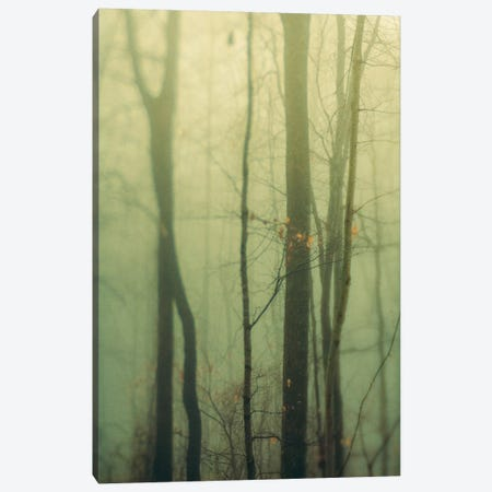 Trees In Fog I Canvas Print #OJS232} by Olivia Joy StClaire Art Print