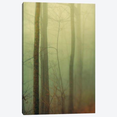 Trees In Fog II Canvas Print #OJS233} by Olivia Joy StClaire Art Print
