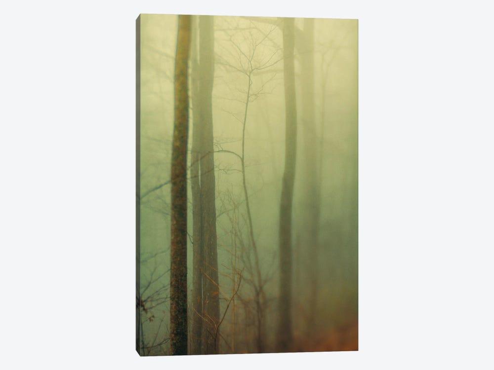 Trees In Fog II by Olivia Joy StClaire 1-piece Canvas Art Print