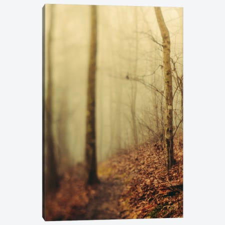 Trees In Fog III Canvas Print #OJS234} by Olivia Joy StClaire Canvas Wall Art