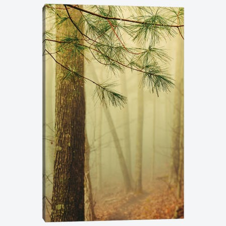 Trees In Fog IV Canvas Print #OJS235} by Olivia Joy StClaire Canvas Wall Art