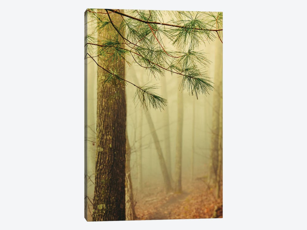 Trees In Fog IV by Olivia Joy StClaire 1-piece Canvas Print