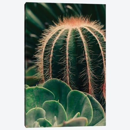 Cactus And Succulent Canvas Print #OJS238} by Olivia Joy StClaire Canvas Art Print